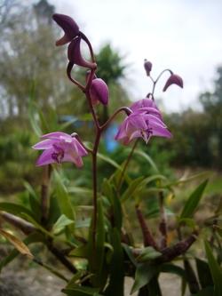 Orchidées : entretien