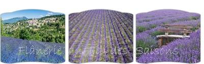 La lavande en Provence ! cartonnettes