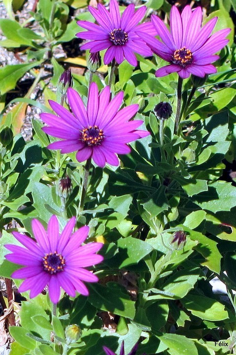 k02---Jolies-fleurs.JPG