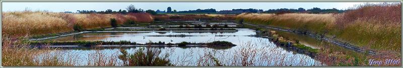 Paysage sur le marais aux avocettes - La Couarde-sur-Mer - Île de Ré - 17