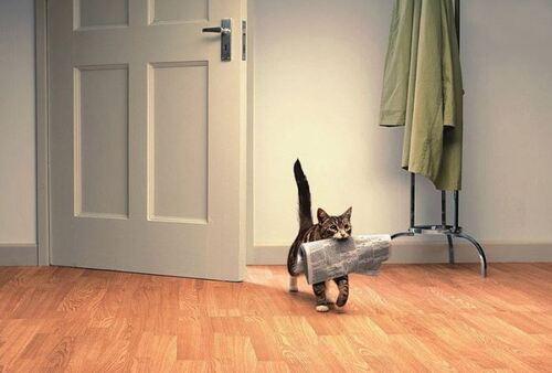 05 - Le chat et le journal