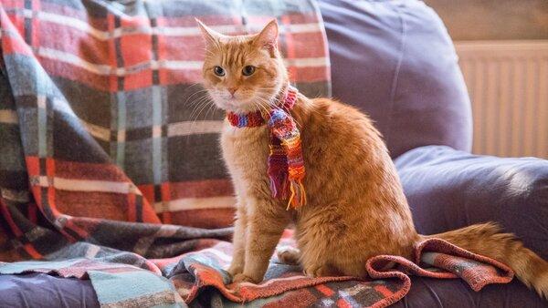 Film Un chat pour la vie