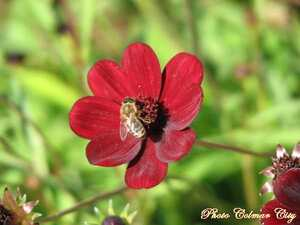http://i54.tinypic.com/ztdlxk.jpg