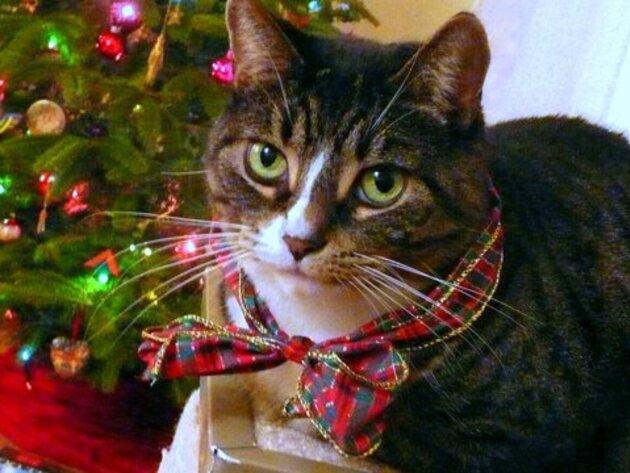 Noel des chiens et chats