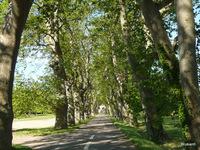 chemin menant à Villeneuvette