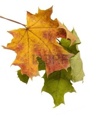 http://us.123rf.com/400wm/400/400/anzav/anzav0702/anzav070200030/748008-multi-couleur-des-feuilles-d-39-automne-sur-un-fond-blanc.jpg