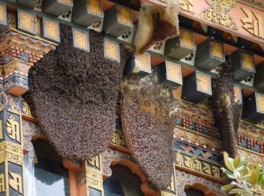 Les abeilles, une histoire de ruches ...
