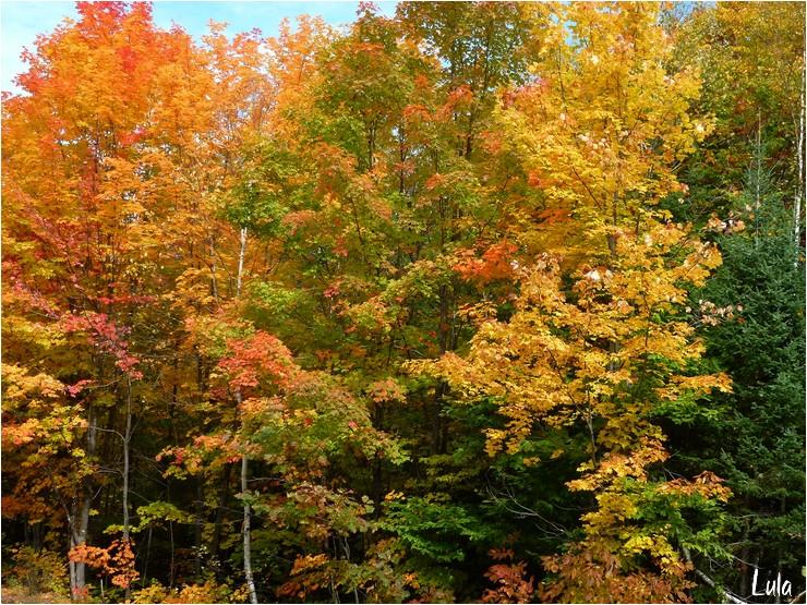 "Tubes ""Paysages"" automne"