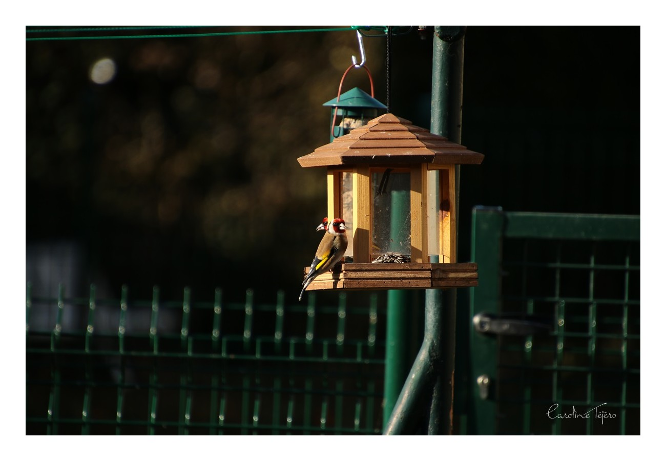 Test du Tamron 18-400mm sur les oiseaux du jardin