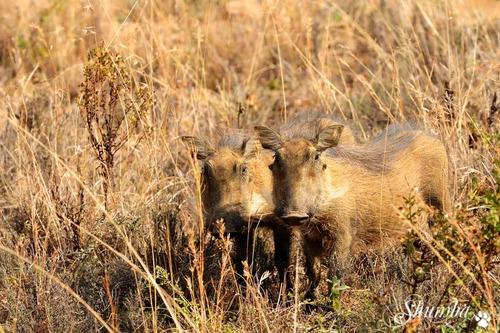 Ithala GR: Wildlife