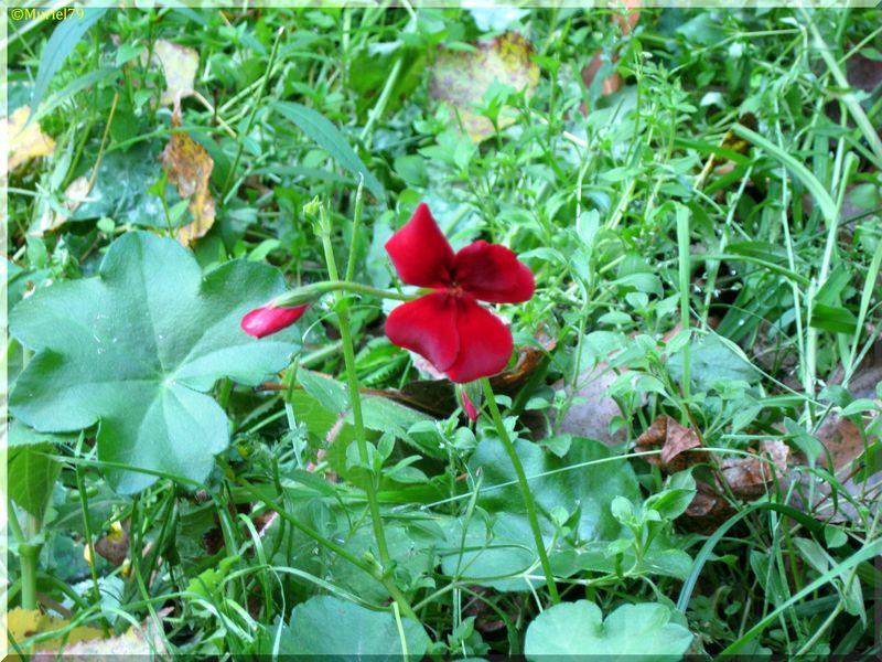 P'tite fleur...