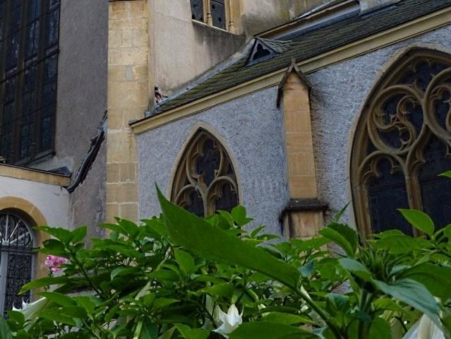 Jardin de curé église Saint-Martin Metz 2011 - 3