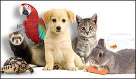 A cause de TES animaux