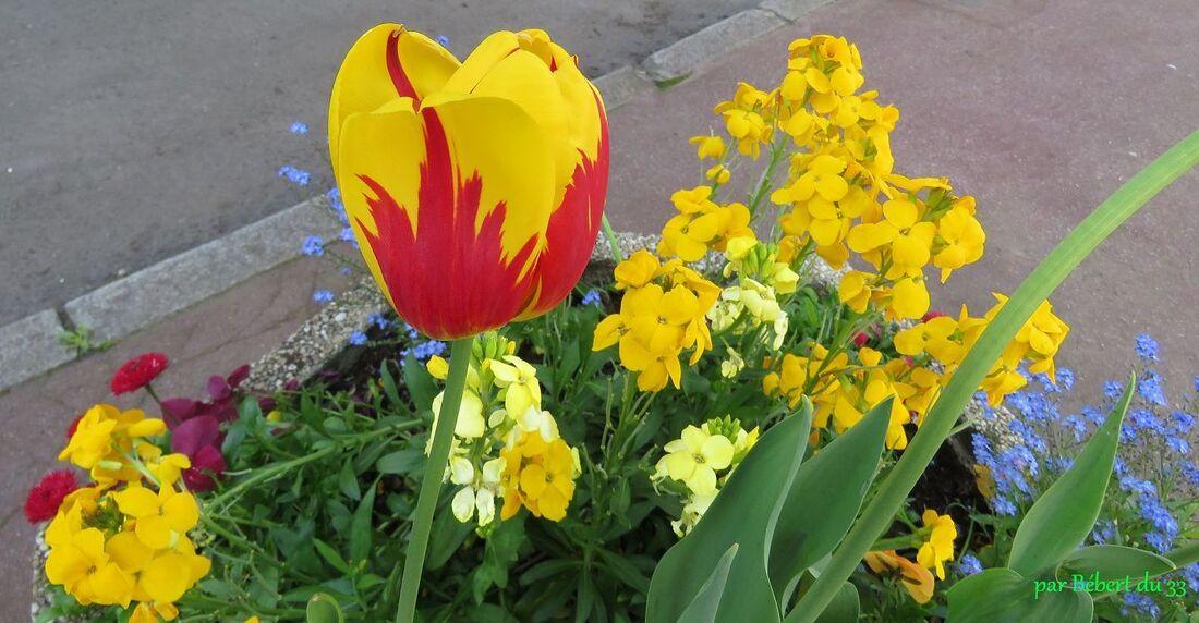 tulipes et ...