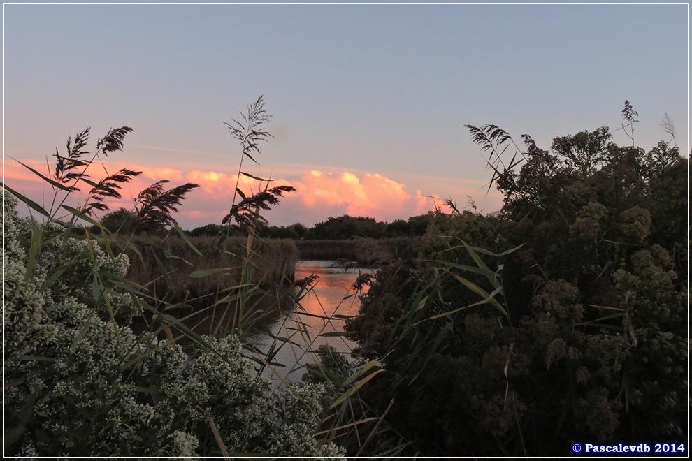 Réserve ornithologique du Teich - 10/10