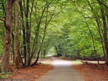Randonnée a la foret de Fontainebleau