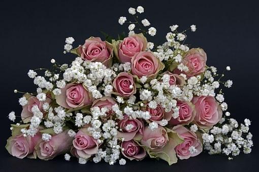 Roses, Fleur Rose, Fleurs, Rose, Blanc