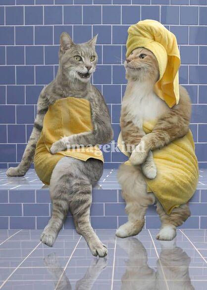 Sauna Cats