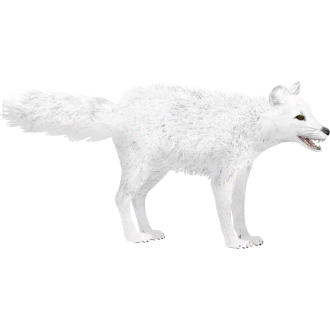 File:Arctic Fox (Lgcfm & Whalebite) Winter.png