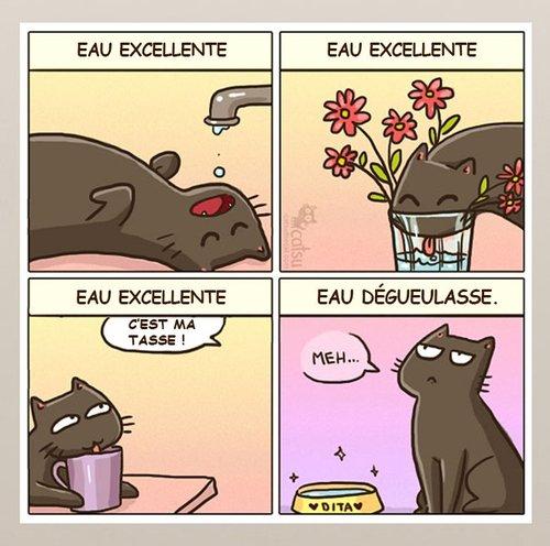 AH les chats !!!