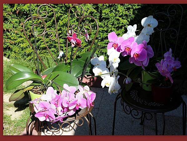 2012-08-13 persiennes,,,huche à pain,,,orchidées,,,4