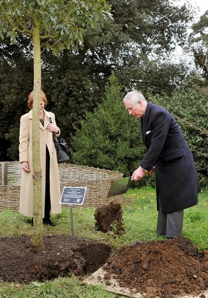 Charles plante un arbre