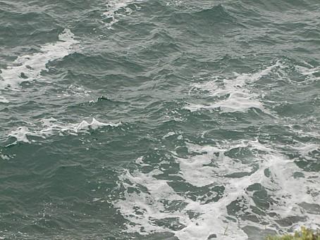 La-Plaine-Sur-Mer-4830.JPG