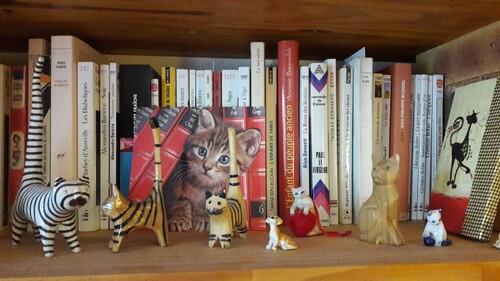Chats de bibliothèque (2)