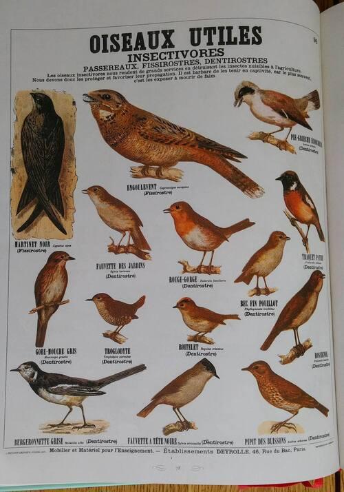 Fable: Le Perroquet et le Linot _ Illustrations oiseaux Deyrolle