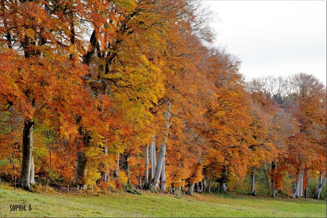 Parmi les arbres d'Allagnat .