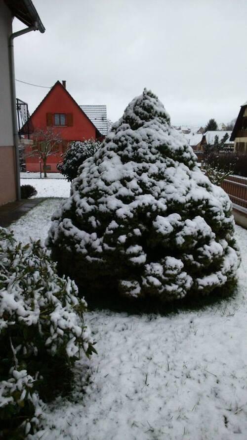 1ère neige