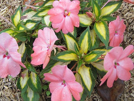 fleurs-4191.JPG
