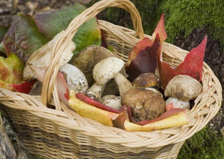 Cueillir les champignons pour se préparer de savoureux petits plats - C. Hochet - Rustica.