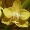 Orchidées 017.JPG