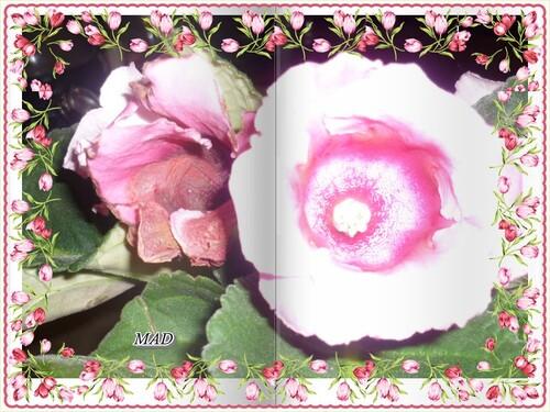 Suite Aux Coeurs des Fleurs