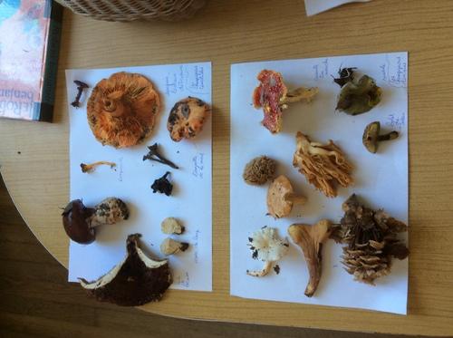 CE1-CE2 Les champignons