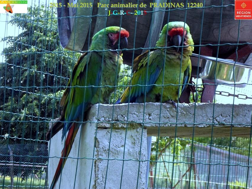 Parc animalier de PRADINAS 12   24-05-2015    5/7  D 11/04/2016