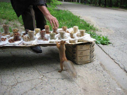 cocasse-ecureuil-arachides.jpg