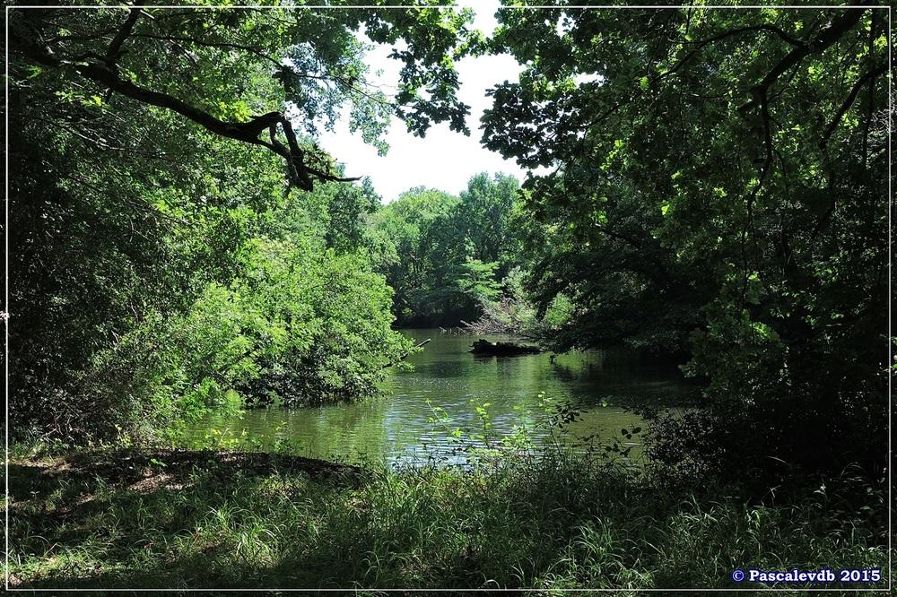 Du pont de l'Eyga aux rives de la Leyre - Août 2015 - 4/6