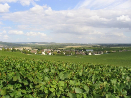 vignoble d'eperney