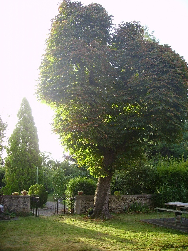 le jardin... trop beau xD