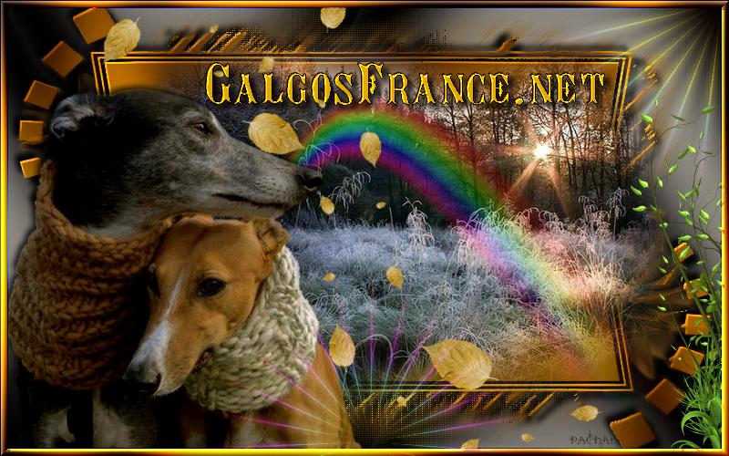 Grand défi - cadeau pour GalgosFrance
