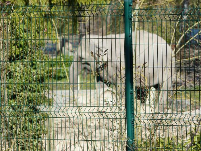 Chouette le zoo est ouvert