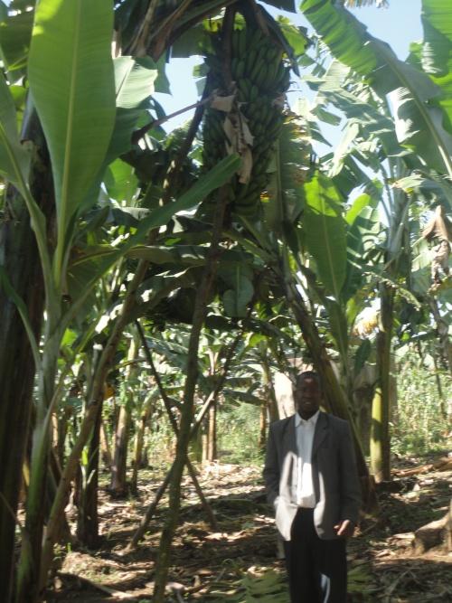 des graines bio pour planter puis nourrir sain!