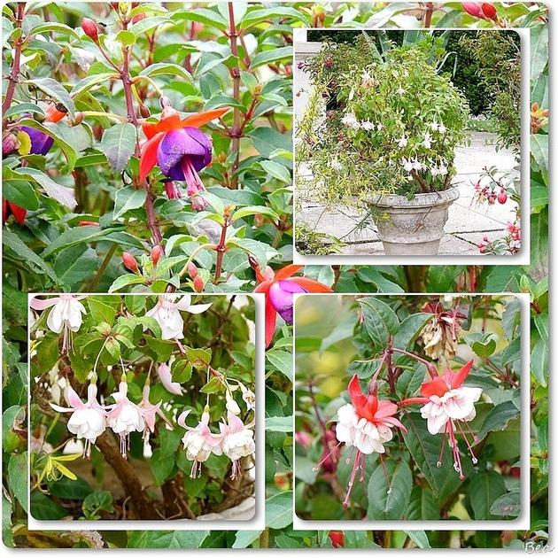 Un jardin extrordinaire