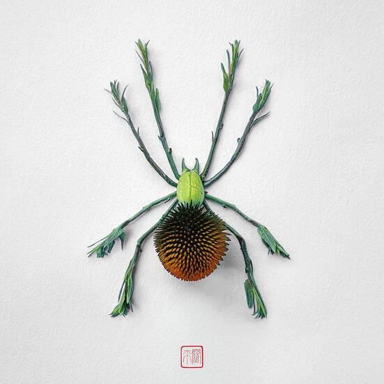 Raku Inoue - Insecte fleur