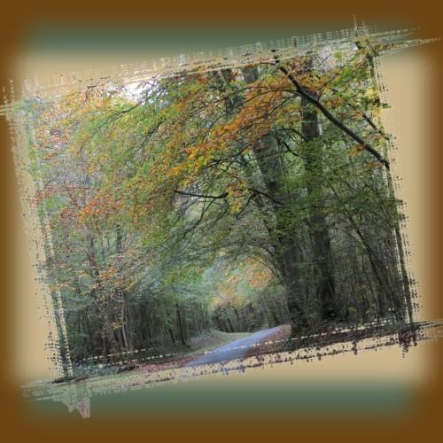 automne 8