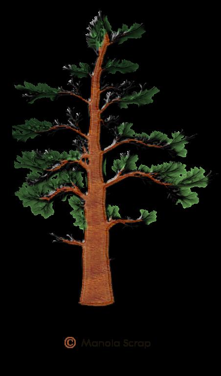 Nature 5 les arbres