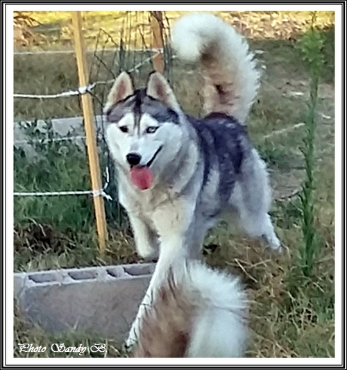 Iwik (2,5 ans)