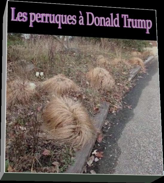 Les perruques à Donald Trump (Humour)